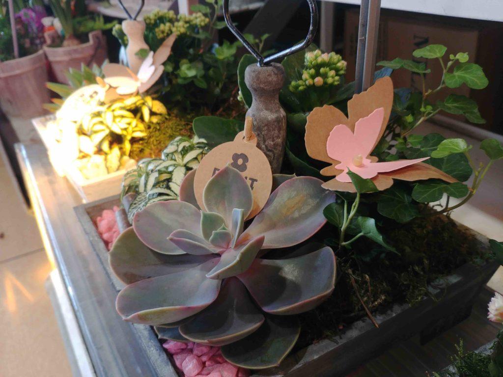Fleurs de l'Olympe fleuriste Goussainville centre commercial Carrefour Gonesse Arnouville fleurs fraiches de qualité fleurs roses éternelles plantes grasses
