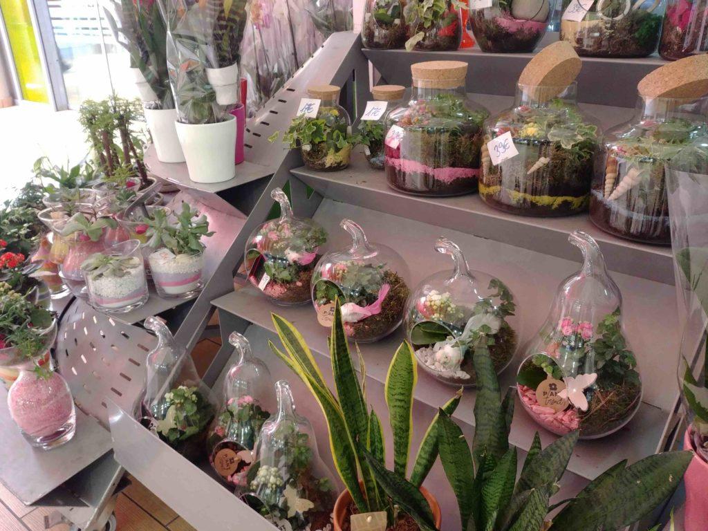 Fleurs de l'Olympe fleuriste Goussainville centre commercial Carrefour Gonesse Arnouville fleurs fraiches de qualité fleurs roses éternelles terrarium