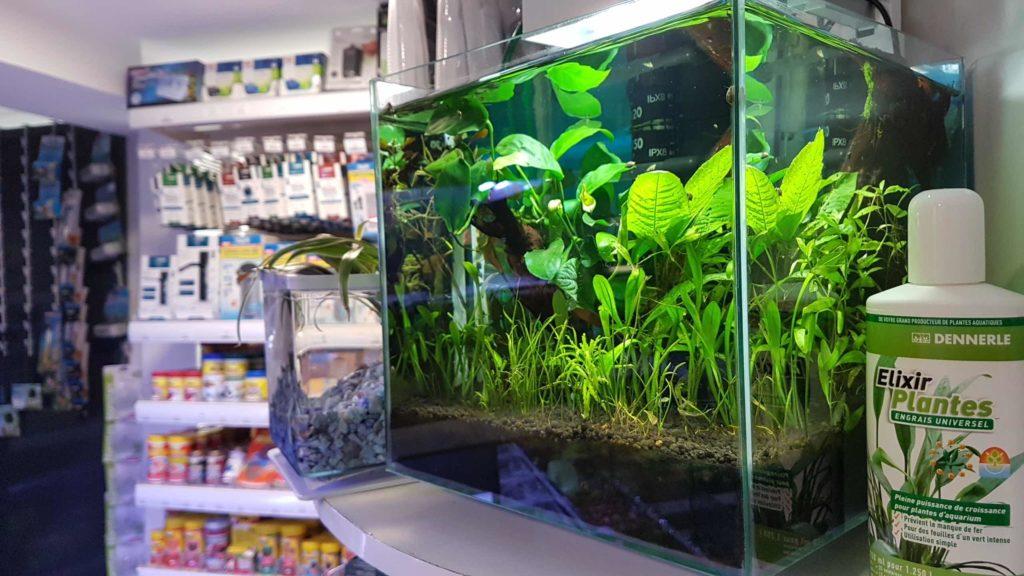 mascottes-animalerie-chien-chat-rongeurs-poissons-aquariophilie-accessoires-animaux-magasin-aquarium