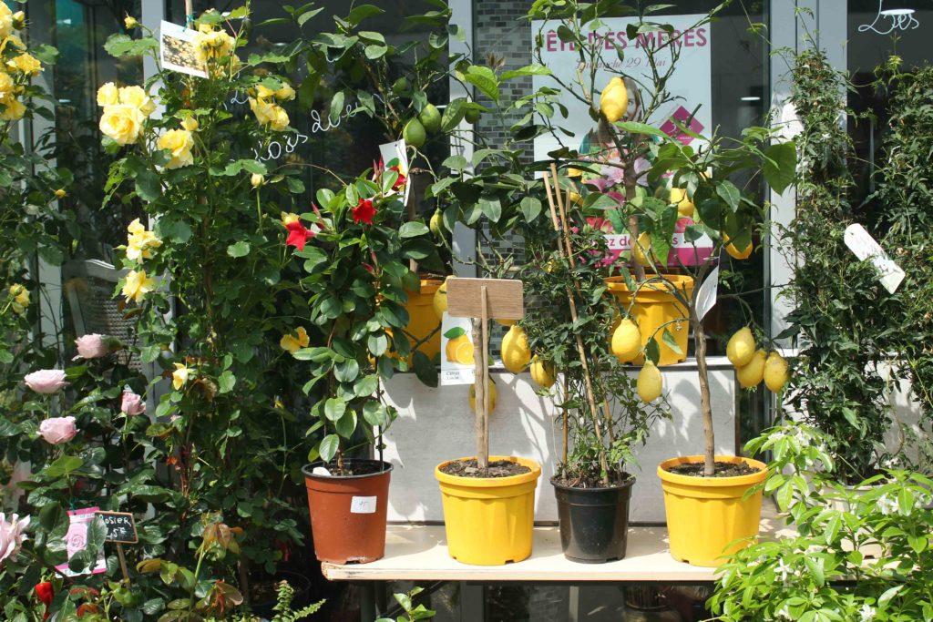 Les Jardins d-Andalousie fleuriste fleurs bouquet citronniers boutique paris 18 marcadet poissonniers petit commerce www.petitscommerces.fr