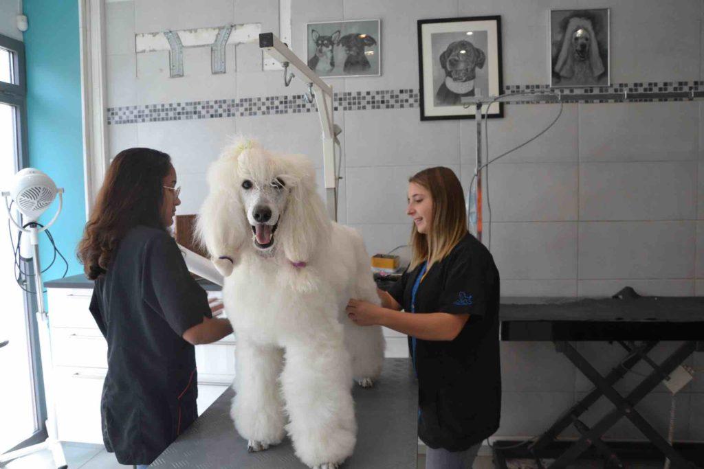 Au Chien Chic Salon de toilettage Argenteuil Toiletteur chiens chats rue de la poste prolongee loka4