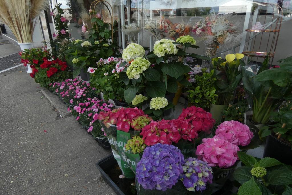 Fleurs-en-pot-2-Lilas-Fleurs-Arnouville