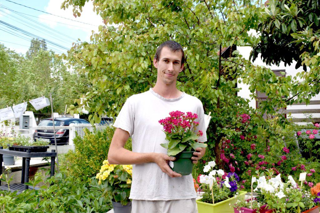 Les-Serres-de-Mitry-Horticulteur-Maraicher-Mitry-Mory-Gael-propose-des-Kalanchoe