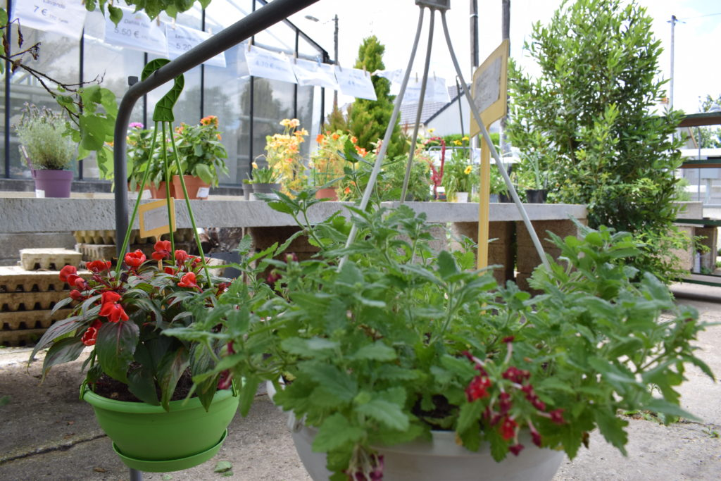 Les-Serres-de-Mitry-Horticulteur-Maraicher-Mitry-Mory-suspensions-fleuries-pour-balcons