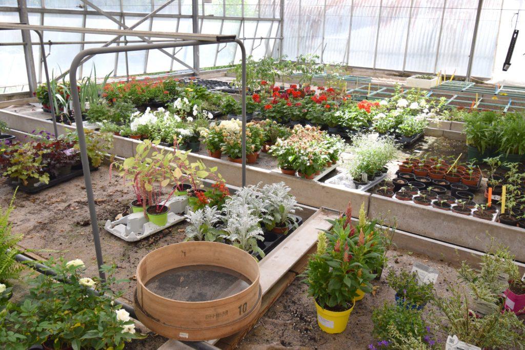 Les-Serres-de-Mitry-Horticulteur-Maraicher-Mitry-Mory-vue-interieure-des-serres